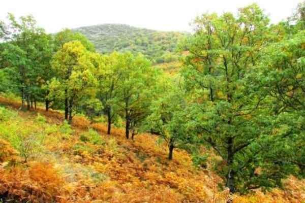 otoño, castaños del temblar